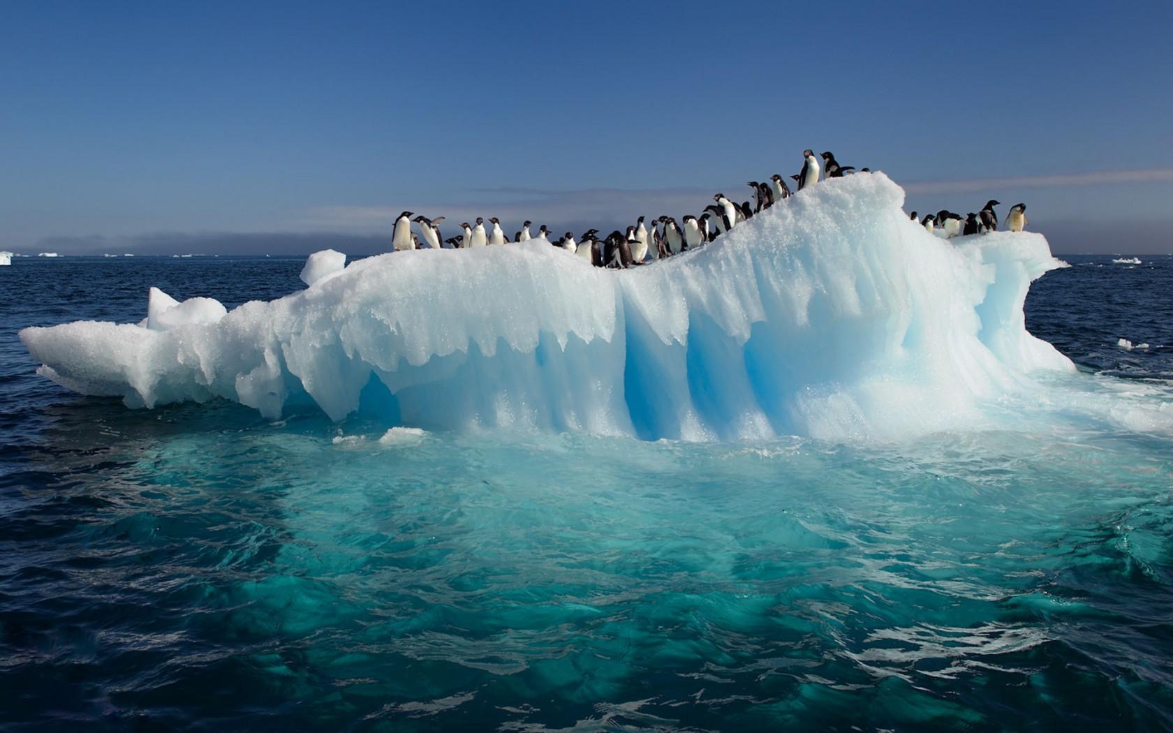 clima_pinguini