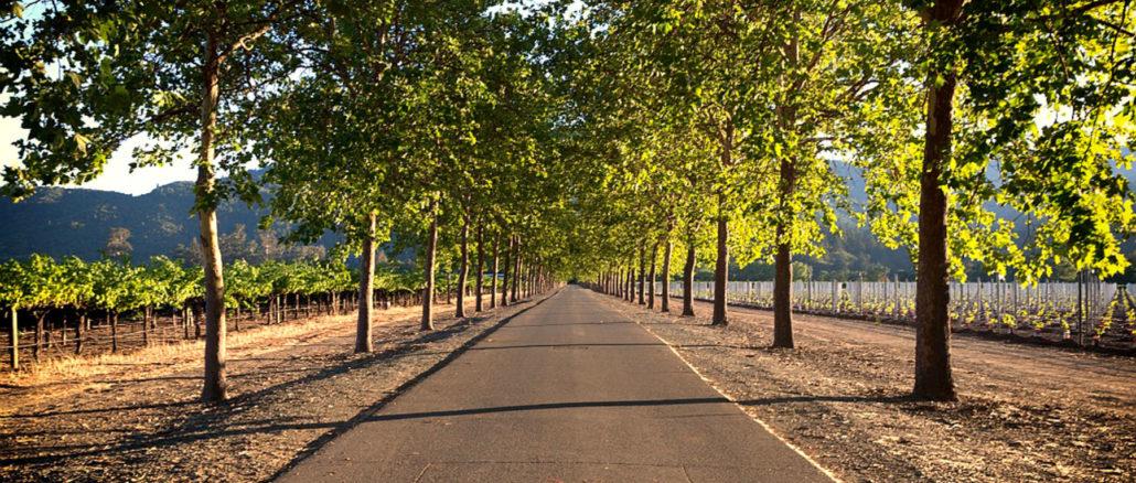 strada alberi