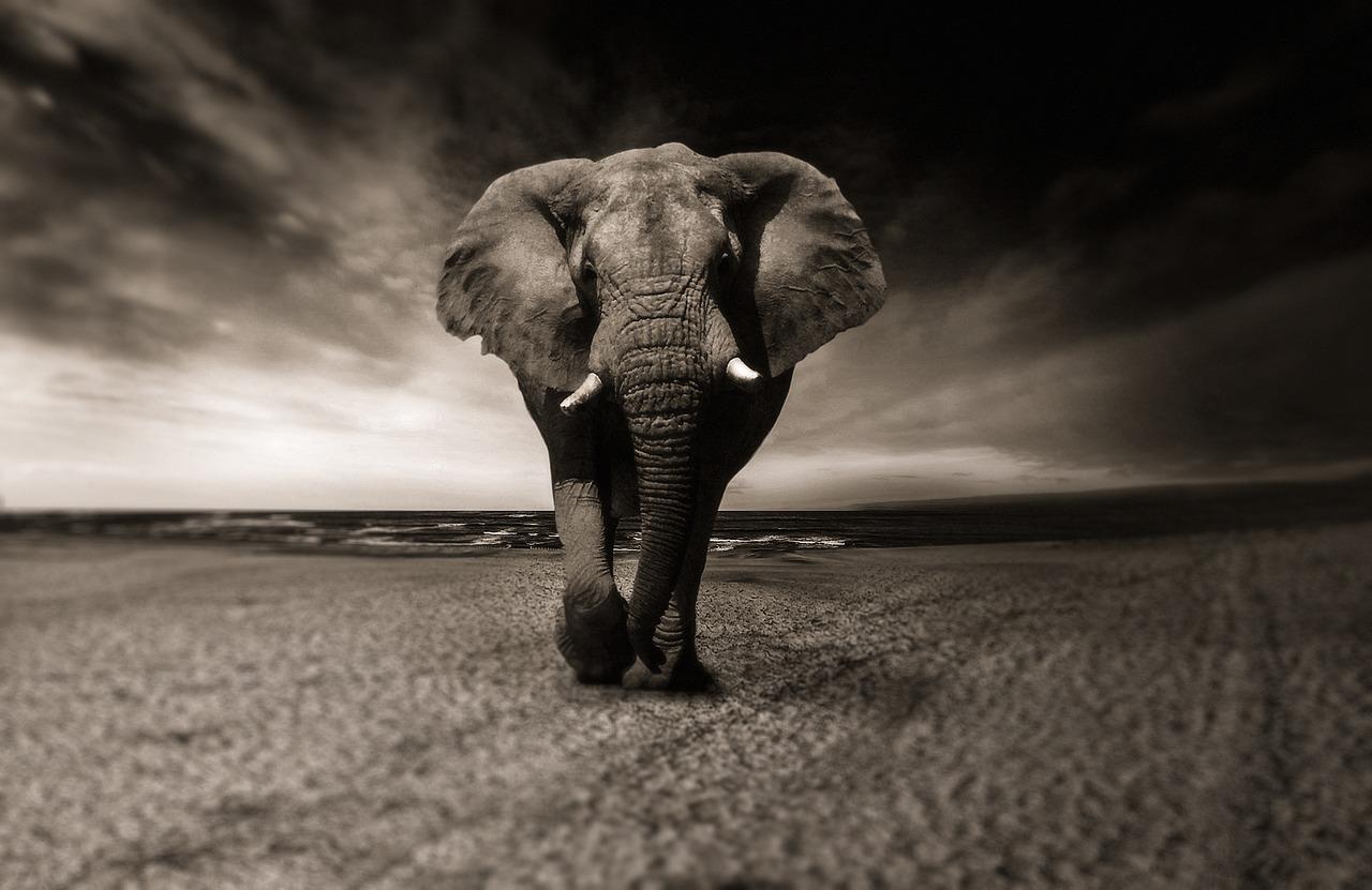 elephant-2870777_1280